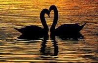 Разгадка тайны любви с позиции генетики и естественного отбора