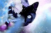 Почему кошка является индикатором человеческой кармы?