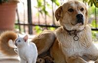 Кошки, собаки и фэншуй