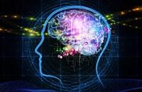 Какие упражнения полезны для мозга?