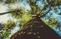 Как энергетика деревьев влияет на биополе человека?