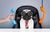 На какой необычной должности Вы могли бы работать?