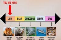 Онлайн тест: Вы мыслите как лев или акула?