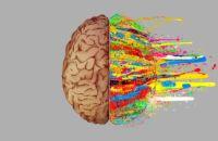 10 способов понять какое полушарие мозга доминирует