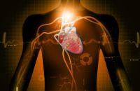 Биоритмы человека для крепкого здоровья