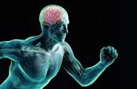 Физическая активность и мозг. Нужно двигаться!
